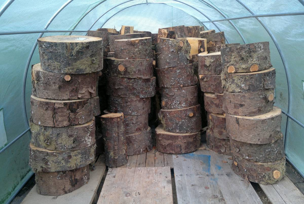Slices of sitka spruce, stacked inside the polytunnel.